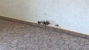 Feuchtigkeit Wand Schimmel : schimmel an der wand beseitigen frag mutti ~ Sanjose-hotels-ca.com Haus und Dekorationen