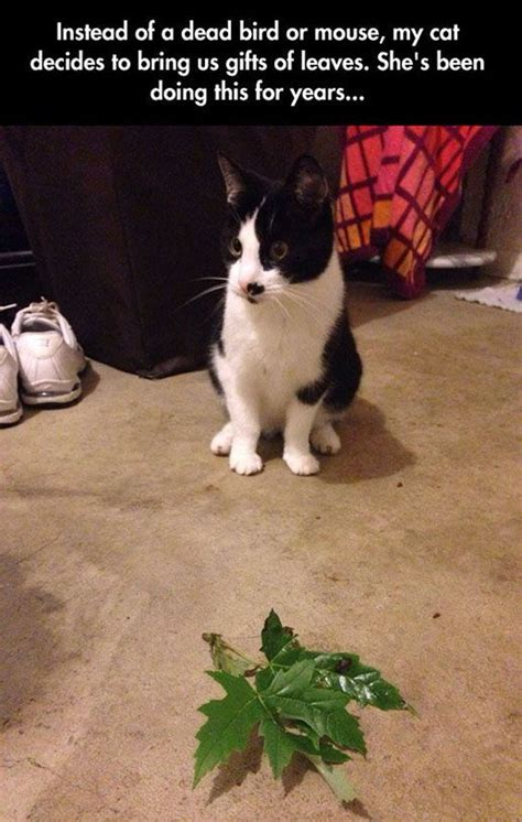 cat brings owners leaves pictures   images