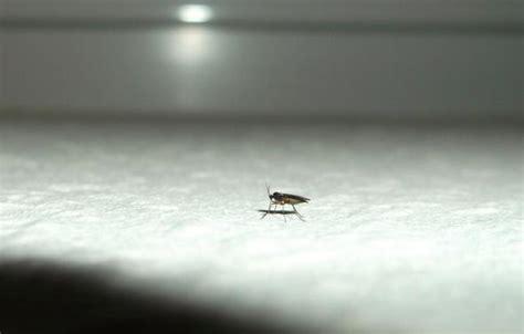 Woher Kommen Diese Kleinen Fliegen In Unserem Haus