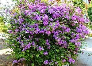 Arbuste Plein Soleil Longue Floraison : ipernity massif de fleurs mauves by valeriane ~ Premium-room.com Idées de Décoration
