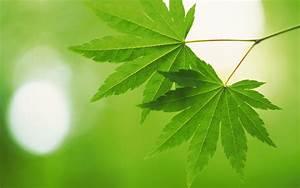 Beautiful, Green, Leaves, Wallpapers