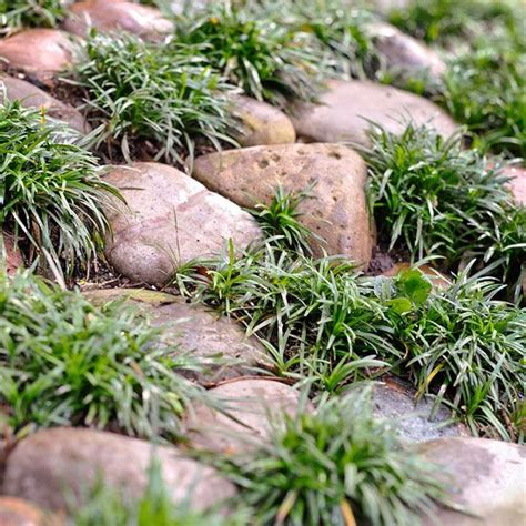 what to plant on a hillside to erosion top 28 what to plant on a hillside to erosion 25 best ideas about erosion control on