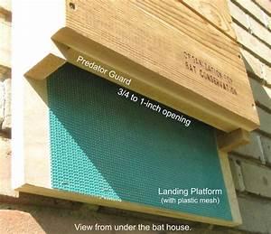 Build a Bat House http://www batconservation org/bat