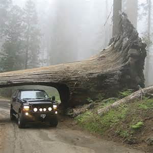 Tunnel Tree Sequoia National Park