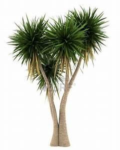 Yucca Palme Garten : die besten 25 yucca palme ideen auf pinterest ~ Lizthompson.info Haus und Dekorationen