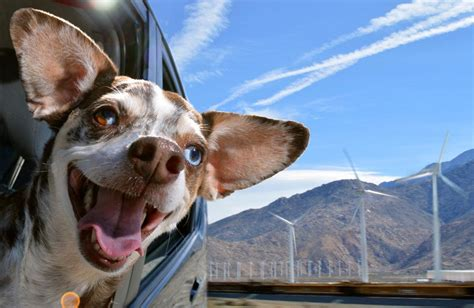 The Unbounded Delirium Of Dogs In Cars Captured By Lara Jo