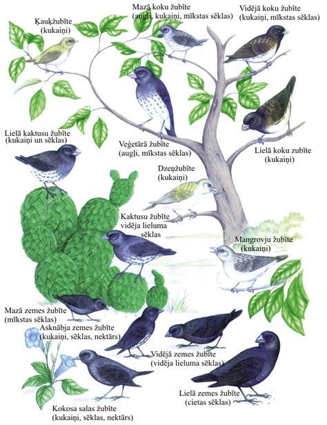 biodzm10: 5.2. Organismu evolucionārās izmaiņas