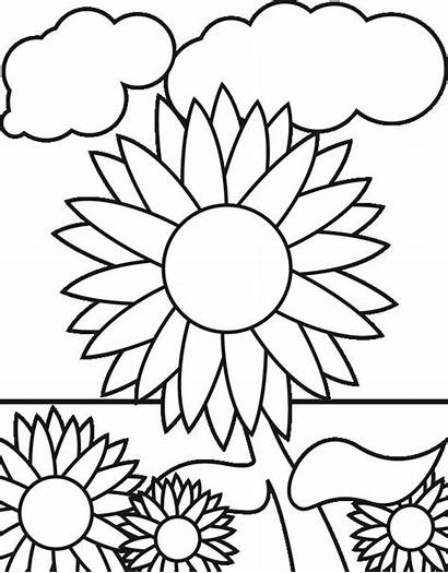 Coloring Garden Sunflower Sunflowers Pages Clipart Clip