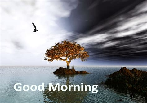 lovable images morning wishes greetings images free
