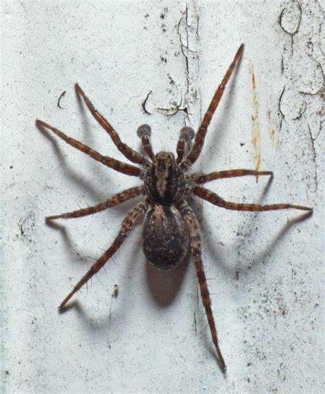 Spider, on back porch, Juneau | Spiders order Araneae ...