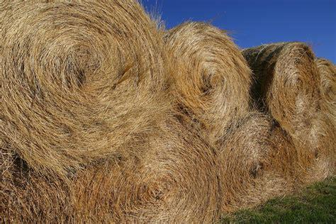 hay horses feeding