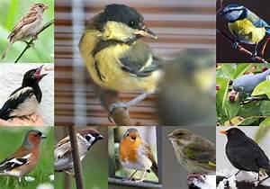 Futterhaus Für Vögel : weniger v gel am futterhaus zu viele nestr uber und ~ Articles-book.com Haus und Dekorationen
