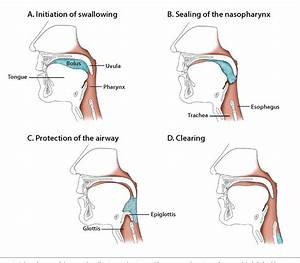Figure 1 From Dysphagia In The Elderly