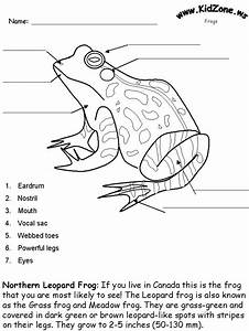 Of Well Labeled Toad And Frog
