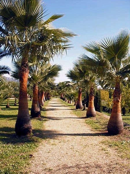 Botanischer Garten Valencia Eintritt by Alfaz Pi Kleiner Schreuder Skulptur Garten