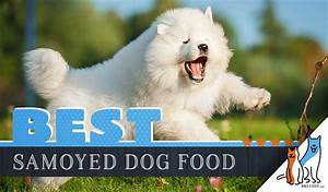 9 Best Samoyed Dog Foods Plus Top Brands For Puppies Seniors