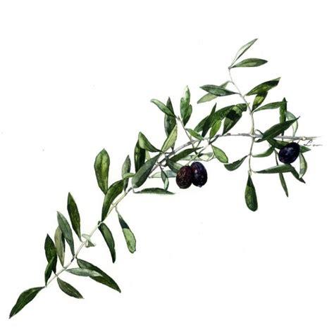 la cuisine d olivier les croyances et les philosophies du bassin m 233 diterran 233 en 187 oracle de la triade 187 venusvoyance