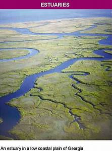 Estuary Biome Images - Reverse Search
