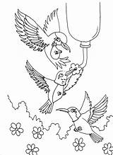 Coloring Hummingbird Pages Printable Adult Hummingbirds Birds Sheets Print Animals Colouring Flowers Adults Books Template Throated Ruby Getcolorings Patterns Getcoloringpages sketch template