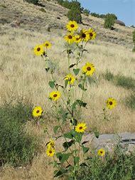 Best 25 ideas about desert flowers find what youll love yellow desert flowers utah mightylinksfo