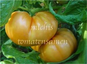 Tomaten Blätter Gelb : fleischtomate brandywine yellow gelb eine der besten tomaten ~ Frokenaadalensverden.com Haus und Dekorationen