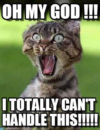 Oh My God Meme - oh my god screaming cat meme on memegen