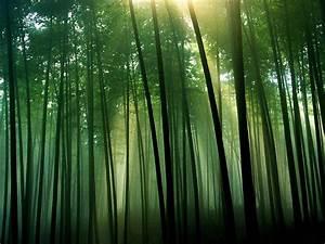 Silhouette Bamboo Forest Wallpaper Wallpaper