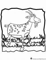 Colorir Goat Coloring Desenhos Cabras Onze Cabra Super Kleurplaten Geit Kleurplaat Imprimir sketch template