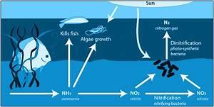 State Diagram For Nitrogen