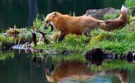 Nature Water Animal