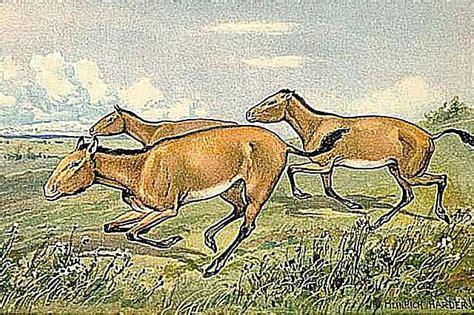 prehistoric hipparion florida animals horse dinosaurs horses louisiana wikimedia wikipedia heinrich harder commons rekonstrukcija vdecka klasifikace