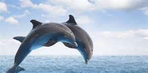 diaporama ces dauphins qui n ont pas rev 234 tu les couleurs