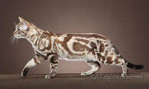Image Gallery marble bengal