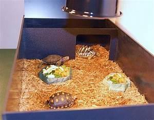 Complete Tortoise Habitat (Medium Starter Tortoise Kit ...