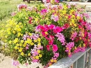 Plantes Et Fleurs Pour Balcon : fleurs et plantes massif plantes d 39 t retombantes ~ Premium-room.com Idées de Décoration