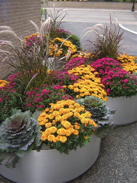 planting chrysanthemums in the fall 867 best images about flowers gardens containers perennials annuals on pinterest