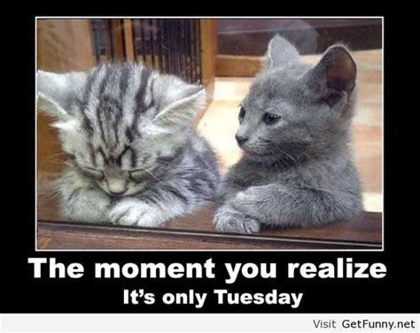 Tuesday Memes Funny - funny tuesday cartoon quotes quotesgram