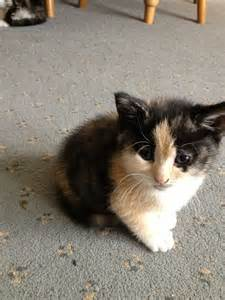 Really Cute Kittens for Sale