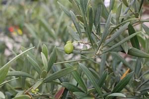 Winterharte Kübelpflanzen Hochstamm : pflanzen berwintern berwinterung ~ Michelbontemps.com Haus und Dekorationen