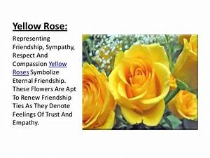 47 best Yellow Rose of Friendship images on Pinterest ...
