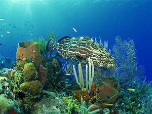 nature wallpaper: Underwater creatures wallpapers