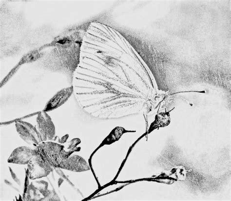 disegni di fiori a matita fiori a matita