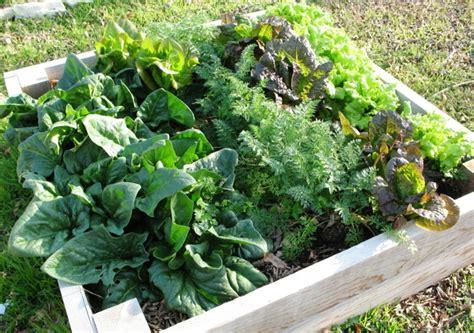 Hochbeete Anlegen Und Die Produktivität Im Kleinen Garten