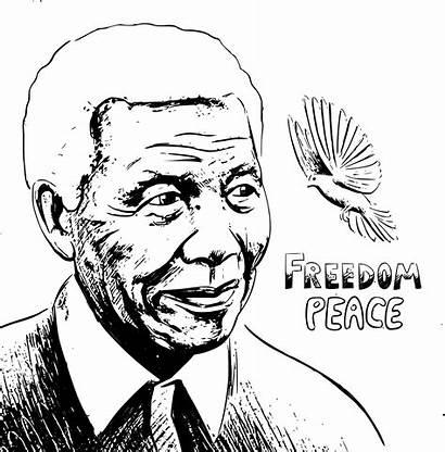 Mandela Nelson Clipart Vector Sketch Portrait Freedom