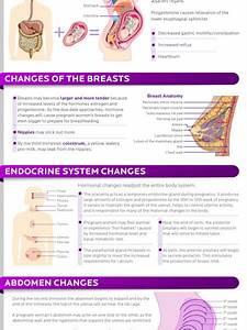 Pregnancy Infographics