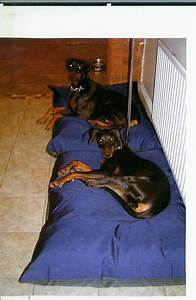 rip proof dog bed image mag dog beds and costumes With rip resistant dog bed