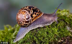 Gardeners On Guard As Marauding Hordes Of Snails Invade