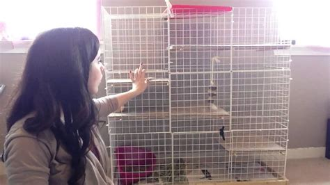 How To Make Your Own Rabbit Hutch by Make Your Own Rabbit Cage