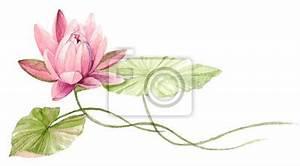 Dessin Fleurs De Lotus : n nuphar ou fleur de lotus sur leau fuchsia dessin tir par papier peint papiers peints ~ Dode.kayakingforconservation.com Idées de Décoration