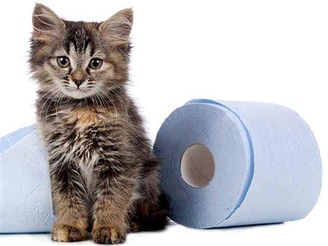 feci molli alimentazione diarrea dissenteria gatto